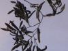 variable-pondweed